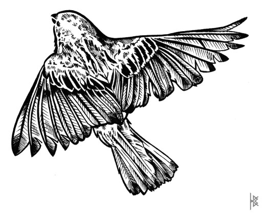 Sparrow Illustration