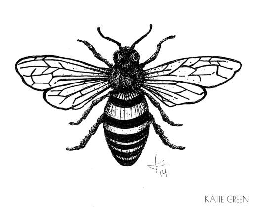 Katie Green Illustration