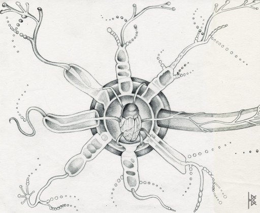KB. ''Seed'' Pencil on Paper, 6'x8'. 2007