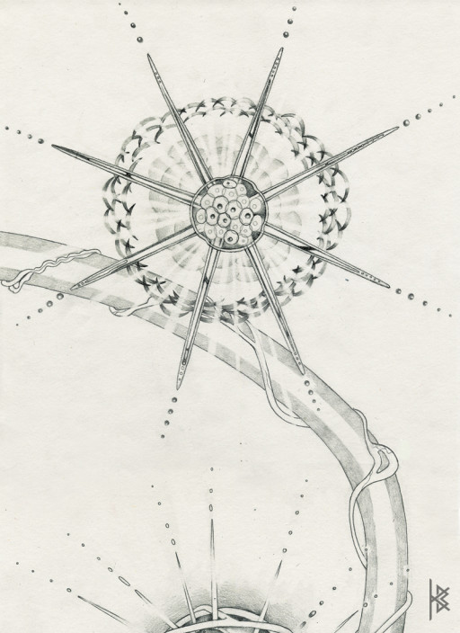 KB. ''Star Divide'' Pencil on Paper, 6'x8'. 2007