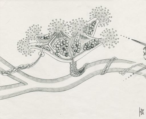 KB. ''Pom Pom Plant'' Pencil on Paper, 6'x8'. 2007